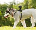 Fixation chien pour Sony HDR-AS15 avec caisson