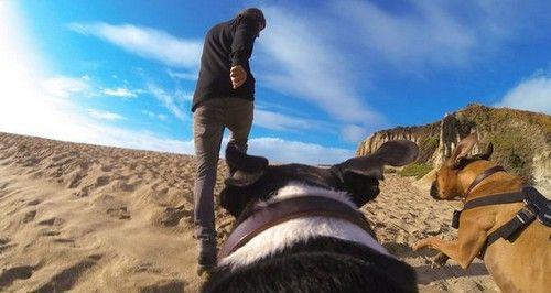 """Fixation harnais pour chien \""""Fetch\"""" pour GoPro"""