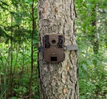 Caméra Spypoint FORCE 10 installée autour d'un arbre