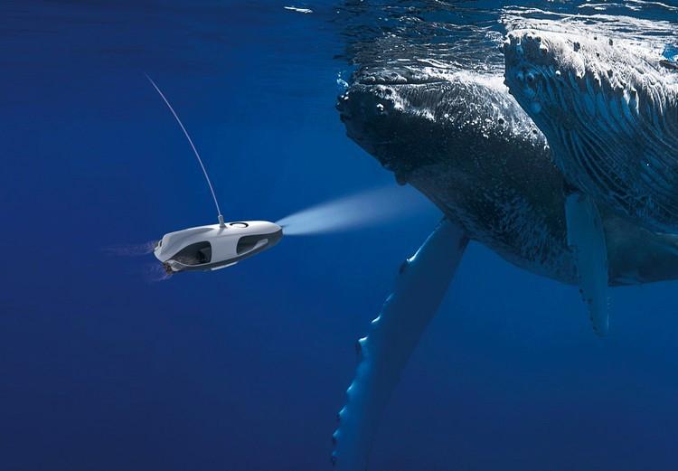 Drone sous-marin PowerRay Explorer - vue sous-marine