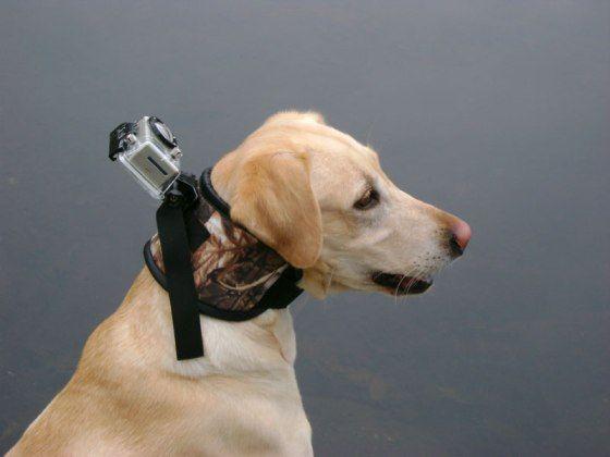 Fixation caméra pour chien de grande taille