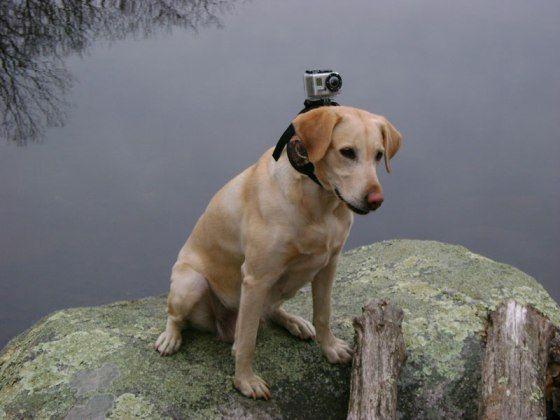 Fixation caméra pour chien de petite taille