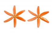 hexapale orange