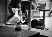 Photo noir et blanc d'une mouette prise par l'objectif M.Zuiko Digital ED 14-42mm 1:3.5‑5.6 - OLYMPUS