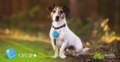 Tracker GPS Acer Circo S porté par un chien